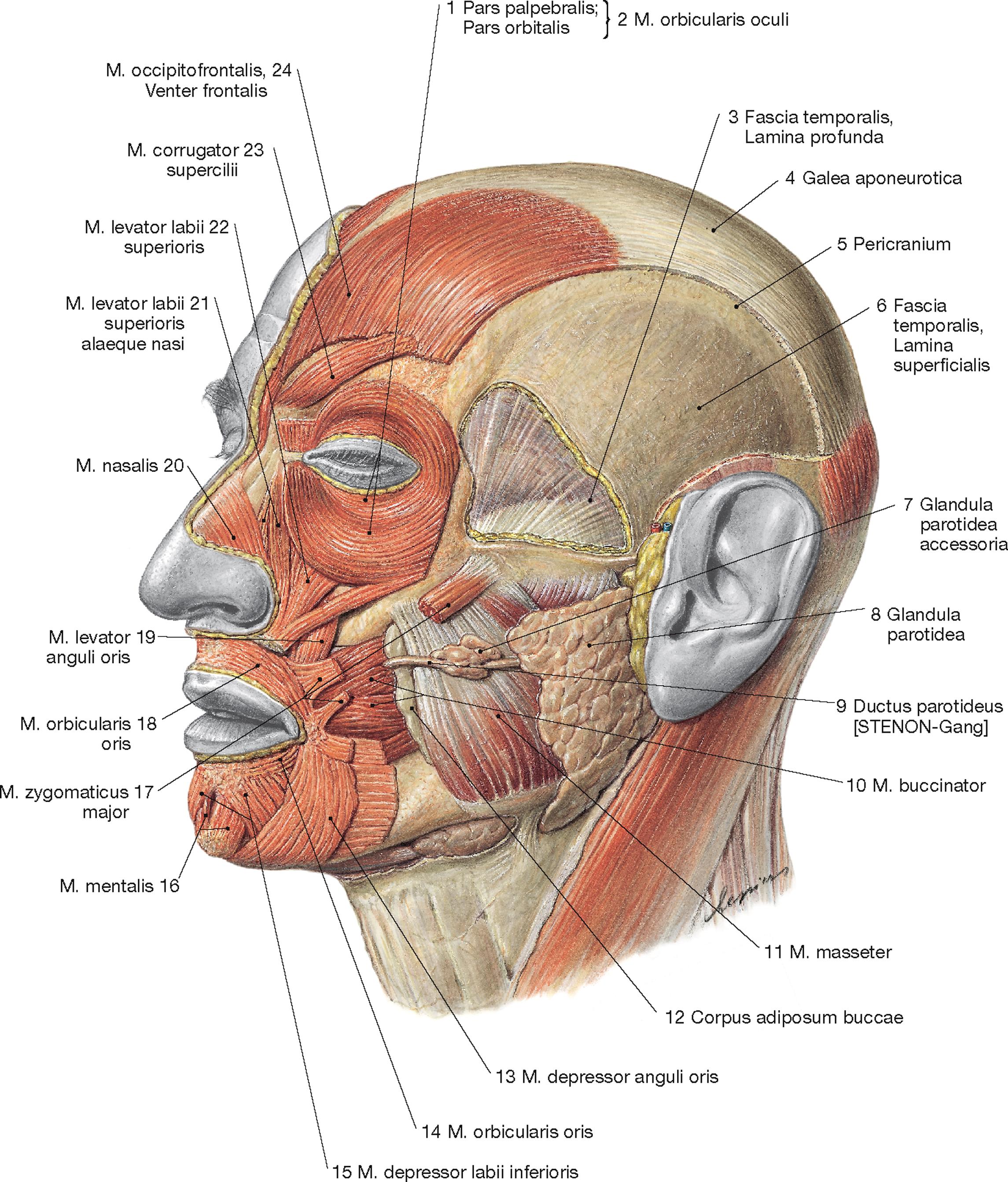 Kopf und Hals Learncard 134927868