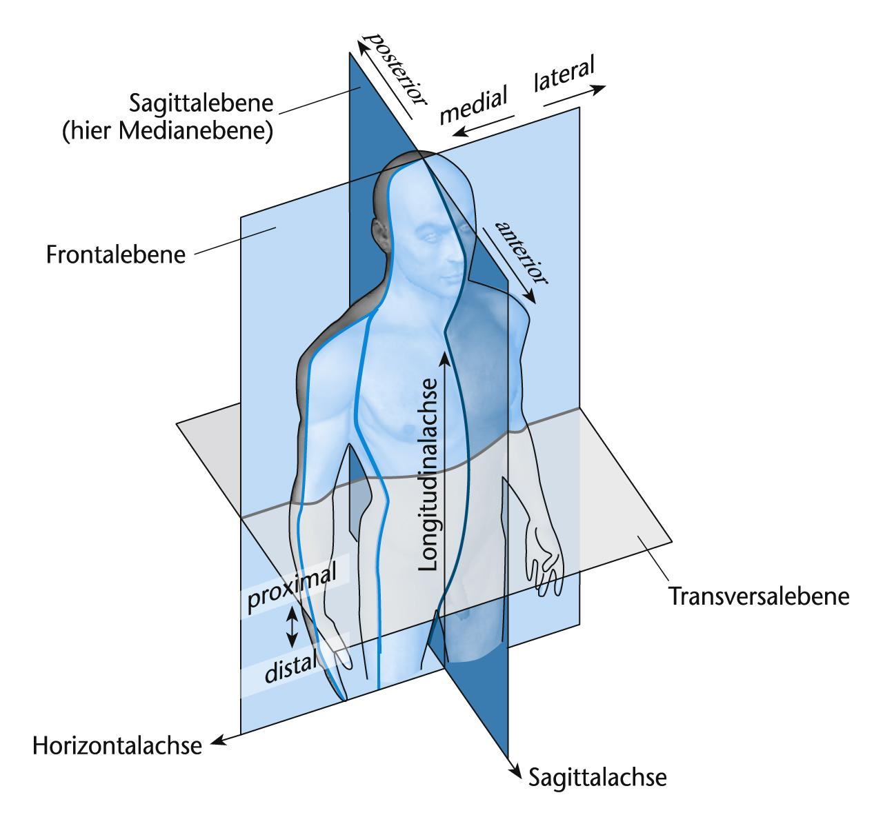Allgemeine Anatomie Learncard 141602865