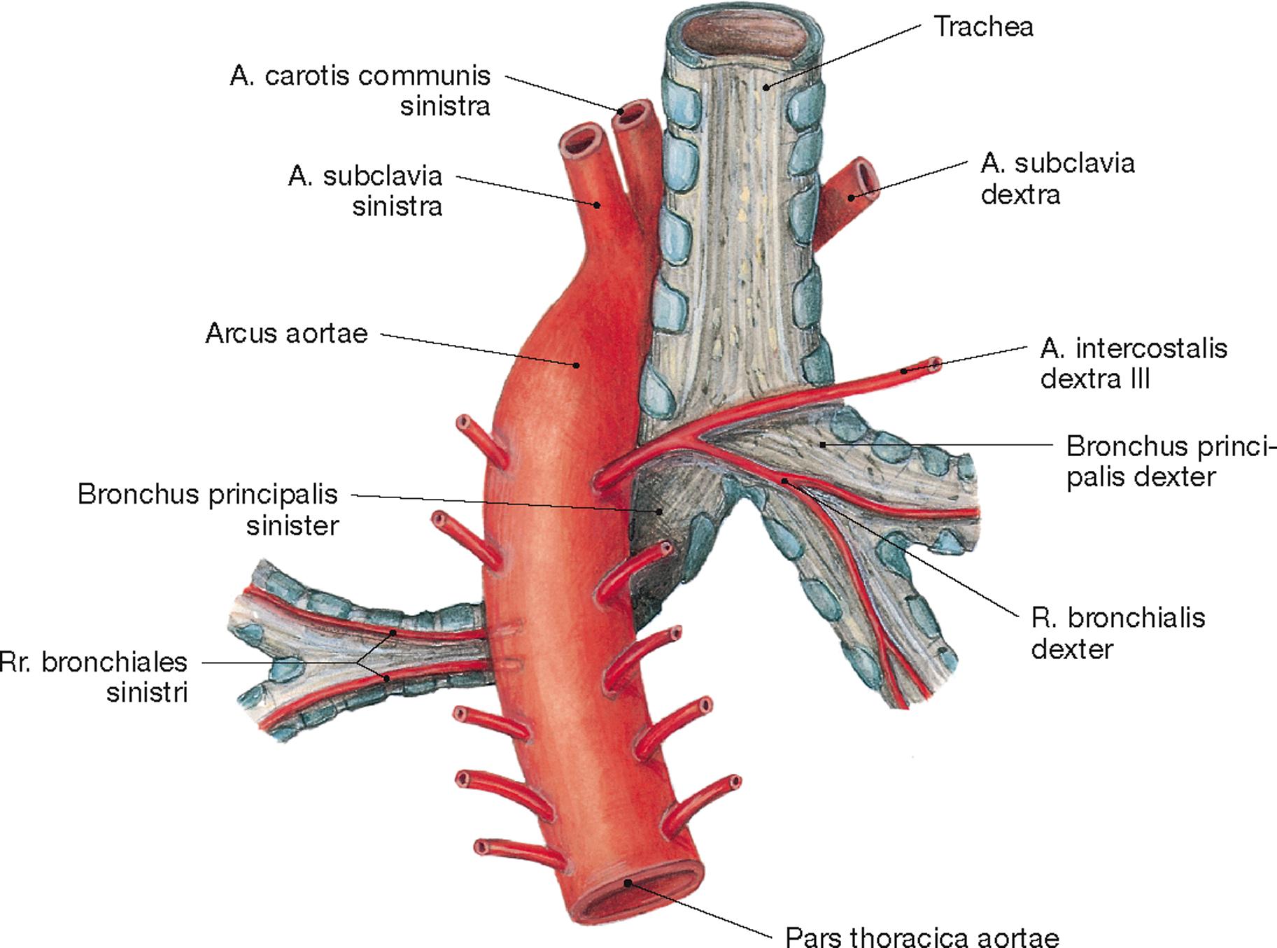 Niedlich Lungen Risse Anatomie Bilder - Anatomie Ideen - finotti.info